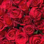 Dozen red roses £3
