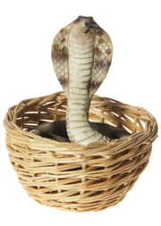 Haggling is like snake charming; if you don't ask you don't get